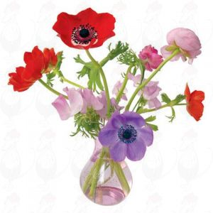 Anemone Window Decal - Flat Flower - 30 x 30 cm