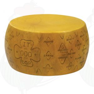 Cheese Dummy Grana Padano