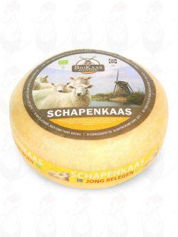 Organic sheep's milk cheese - Gouda Cheese   Premium Quality